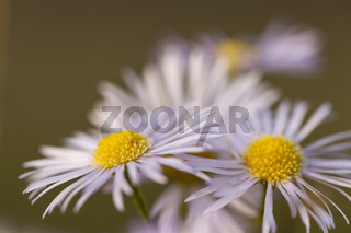 Zartweisse Blueten im November