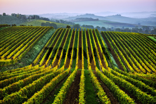 Chianti-Weinlandschaft bei Lilliano, Toskana, Italy