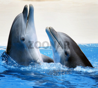 Dolphins in Tenerife