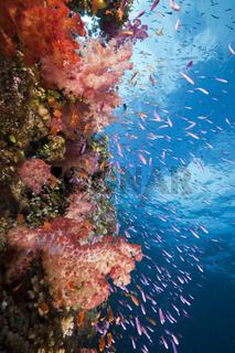 Buntes Korallenriff, Fidschi