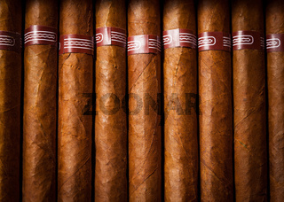 background cigars in humidor