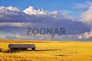 Empty wooden shed