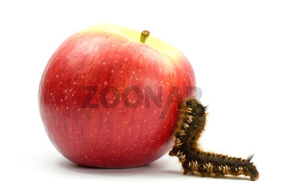 caterpillar climb to the apple