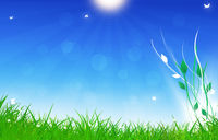 Under Summer Shiny Sun