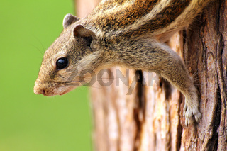 chipmunk sitting on tree