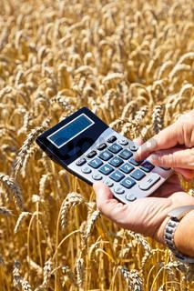 Bauer mit Taschenrechner auf Getreidefeld