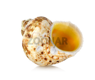 Orange sea shell isolated