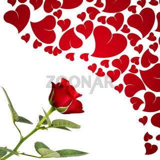 Red rose and hearts for lovers