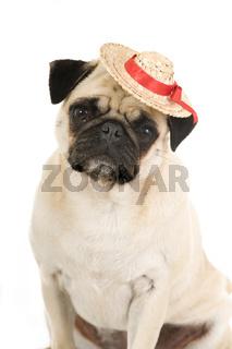 Mops mit Hut