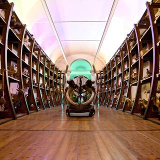 Nature Museum interior