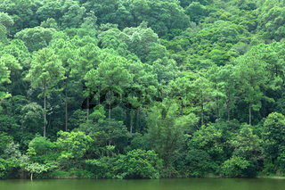 lake with green tree