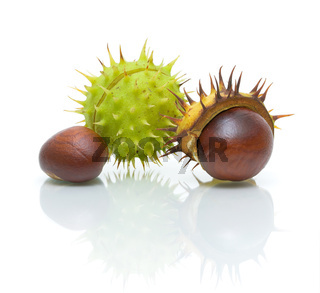 chestnuts on white background with reflection