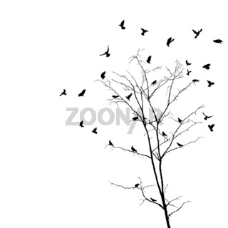 Birds and tree silhouettes