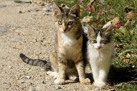 Junge Katzenmutter mit Baby