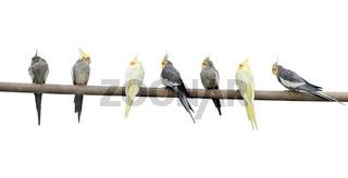 Color parrots on a pole