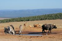 African wildlife at a waterhole