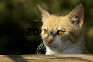 Junges Kätzchen im Gegenlicht