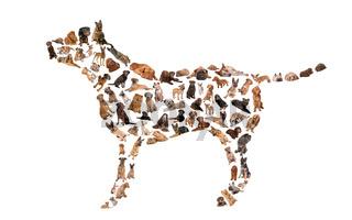 Hundesilhoutte aus lauter kleinen Hundeportraits