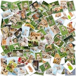 A collage of photos of golden retriever 101 pieces