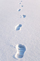 Fußspuren im Schnee / footprints in the snow