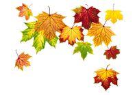 Arrangement aus herunterfallenden Herbstblättern