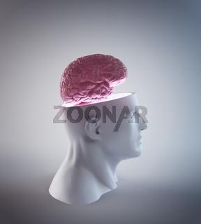 Human Intelligence