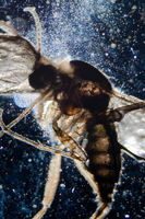 science microscopy animal insect