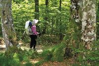 Spanien: Pilgerin im Wald vor Roncesvalles