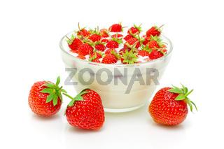 wild strawberry and garden strawberries on a white background
