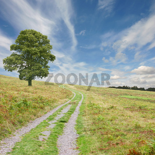 Path with Tree