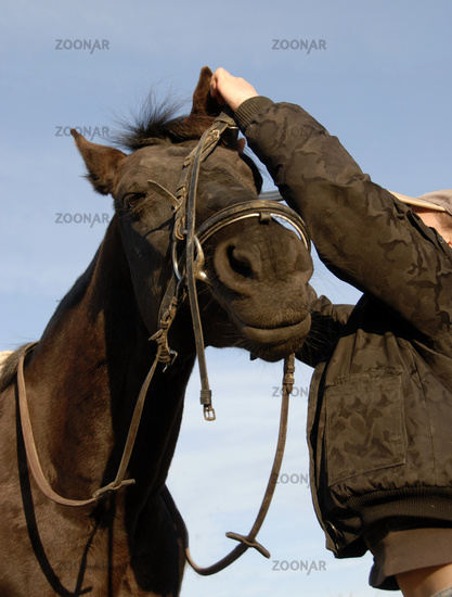 teenager , bridle and her horse
