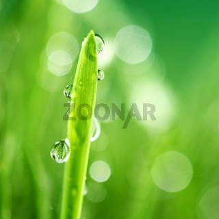 grass nature background grass nature background