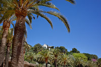 Green palm tree in Park Guell, Barcelona, Spain