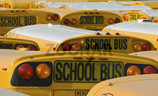 School Buses in a Parking Lot