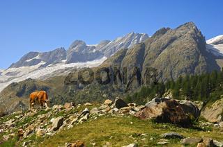 Gebirgslandschaft mit Kuh
