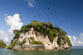 Vogelinsel La Cacata, Dominikanische Republik