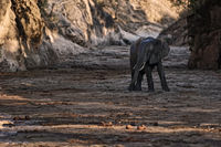 Afrikanischer Elefant in Schlucht.