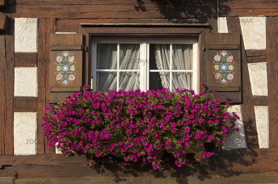 Foto Ubervoller Blumenkasten Mit Petunien An Einem Fenster An Einem
