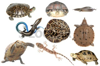 wild animal collection reptile snake lizard turtle and tortoise