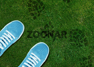 Blue Shoe print on green grassland