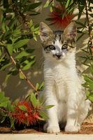 Kleines Kätzchen auf Kefalonia