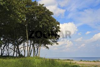 vegetation an der Kueste