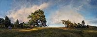 Knorrige Kiefer mit bizarren Wolkenhimmel