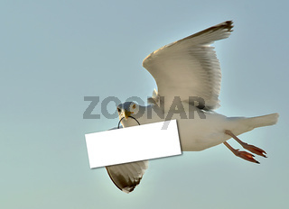 Fotomontage - Moewe hält ein blanko Schild im Schnabel