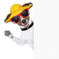 summer dog banner