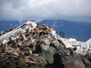 Seelöwen Kolonie