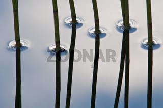 Schilfhalme spiegeln sich in einem See, Rena, Hedmark, Norwegen