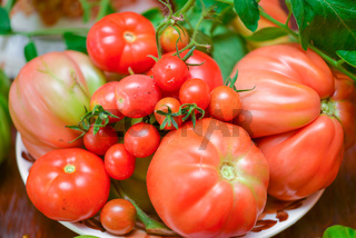 The tomato (Solanum lycopersicum)