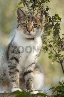 Katze neben einer Brennesselpflanze