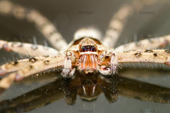 spinnenarten in deutschland bilder